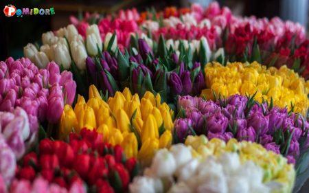 Тюльпаны оптом со склада в Минске